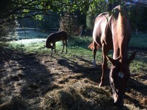 Varsa ja Mirakel aamu