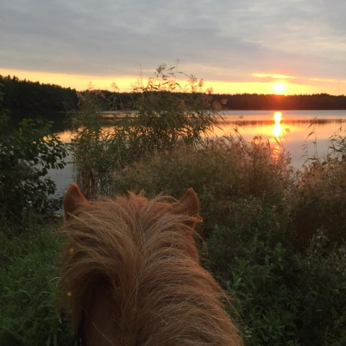 cropped-jarpur-auringonlasku
